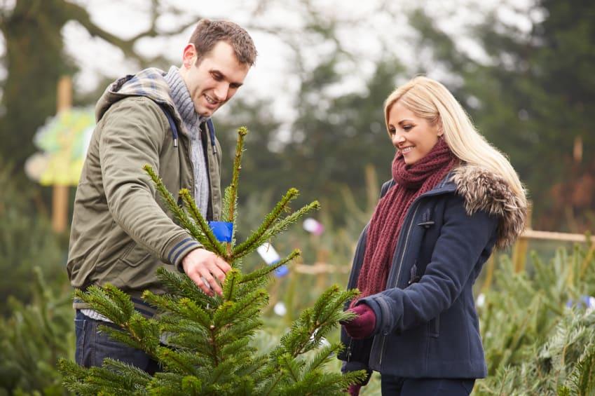 Ein Paar sucht sich einen Weihnachtsbaum aus